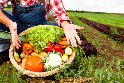 Producteur direct de viande végétale